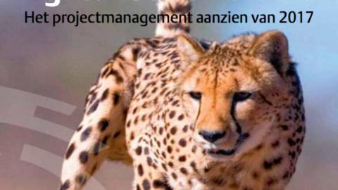Het agile organisatieparadigma